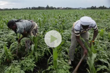 VIDEO: How Freshco Grows Food Security in Kenya
